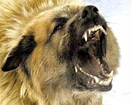 ВБрянске домашних животных  бесплатно привьют отбешенства