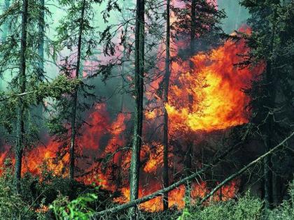 Ввыходные вЧелябинской области случилось три лесных пожара