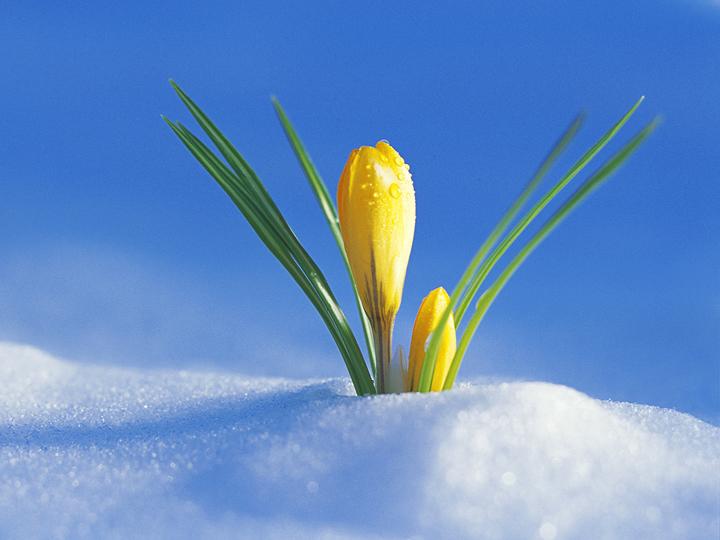 Квыходным наЮжном Урале потеплеет до— Весна пришла