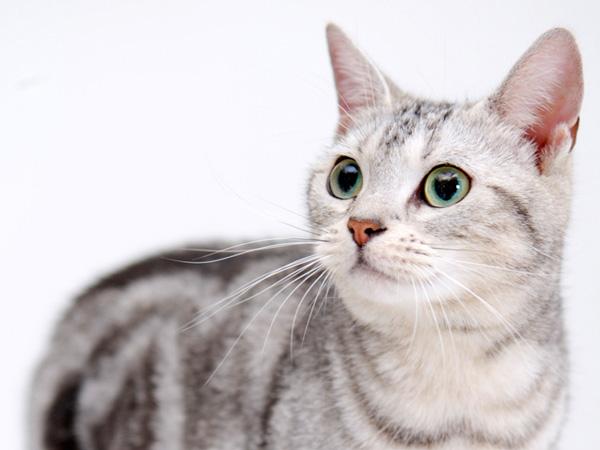 ВСатке изквартиры выселили 25 кошек
