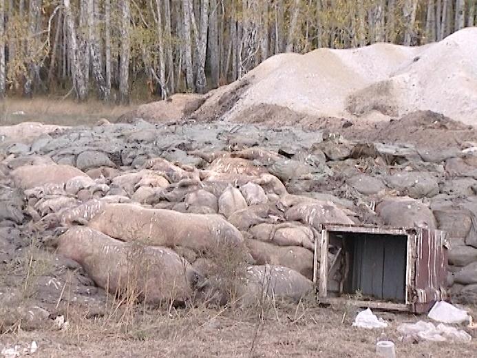 ВЧелябинской области пройдут внеплановые проверки сибиреязвенных захоронений