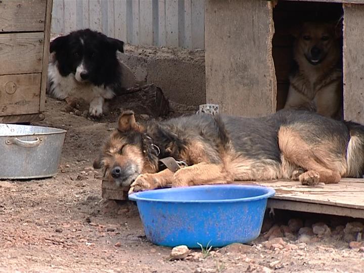 ВЧелябинске расстреляли бродячих собак