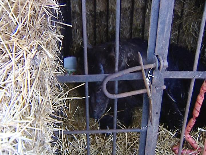 Генпрокуратура проверит условия содержания медведя, пострадавшего напожаре вТроицке