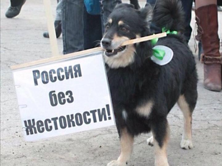 КВсероссийскому съезду против живодеров присоединится Калуга