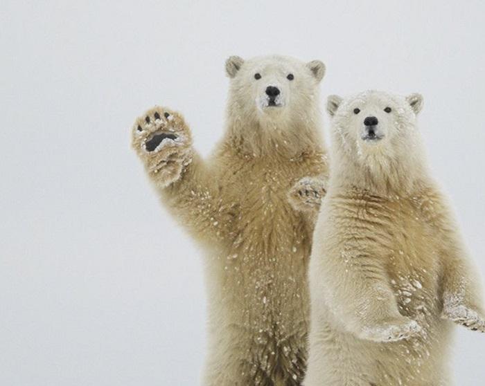 НаКировке откроется уличная фотовыставка «Вызов Северному полюсу»