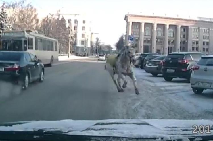 Бешеная лошадь вЧелябинске сбросила наездника икинулась под троллейбус