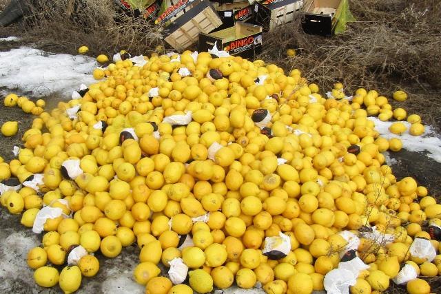 800 килограммов лимонов уничтожили награнице Челябинской области