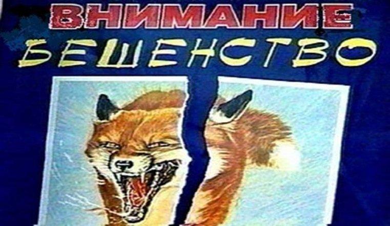 Реальная угроза. Карантин по бешенству ввели в Челябинской области
