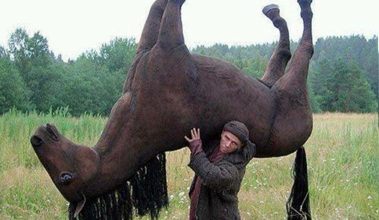 В Челябинской области конокрад украл 49 лошадей