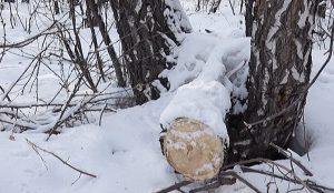 под топор могло пойти больше 20-ти гектаров леса