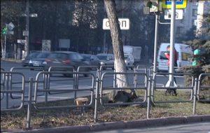 вырубили даурские лиственницы Челябинск