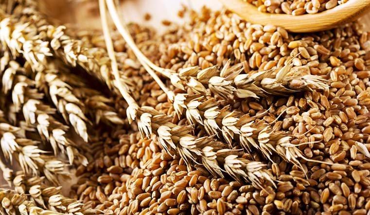 Россия отправит излишки зерна в качестве гуманитарной помощи