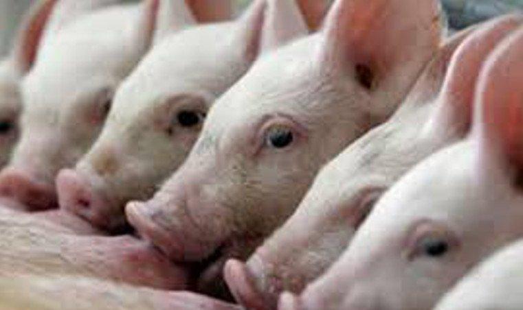 Подозрение наАЧС. ВКургане закрыли центральный рынок