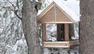 Главное, говорят орнитологи, не перекормить птиц