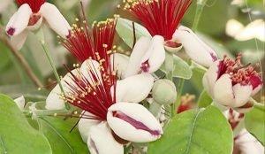 В тропиках посреди бескрайней уральской степи росли папайя, фейхоа, помело, бананы.