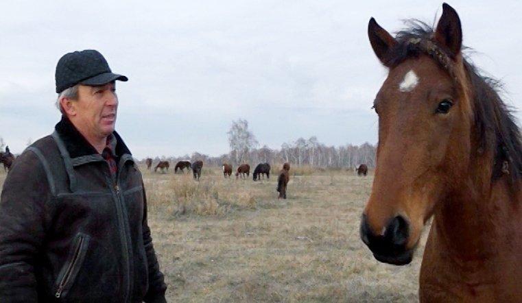 Выращенных с любовью южноуральских скакунов с удовольствием разбирают заводчики из разных регионов России