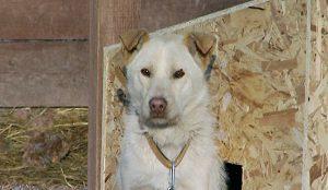 """В """"ХатиКо"""" живут 109 собак"""
