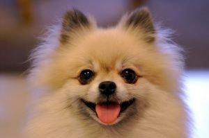 увеличен срок наказания за жестокость к животным