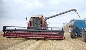 Южноуральские аграрии сообщили о рекордном урожае зерна за 25 лет