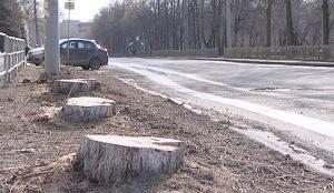 85 деревьев и пять кустарников были уничтожены на участке от Хохрякова до третьей Щербаковской