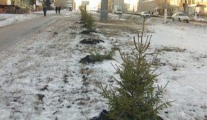 на Южном Урале произошло сразу несколько циничных и незаконных вырубок хвойных