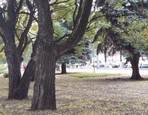 деревья в Челябинске