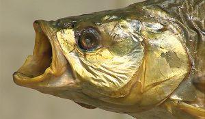 С берегов Дальнего Востока привезут десятки сортов рыбы