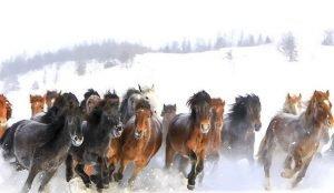 украли табун лошадей
