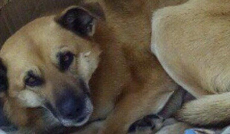 Челяьинцы рассказали об удивительной дружбе бездомной собаки и человека