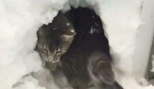Нравится ли кошкам снег?