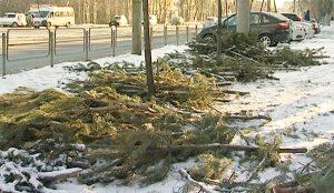 Тефтелев наказал владельцев брошенных елок