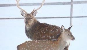 """Зимой животные парка """"Таганай"""" - на усиленном питании"""