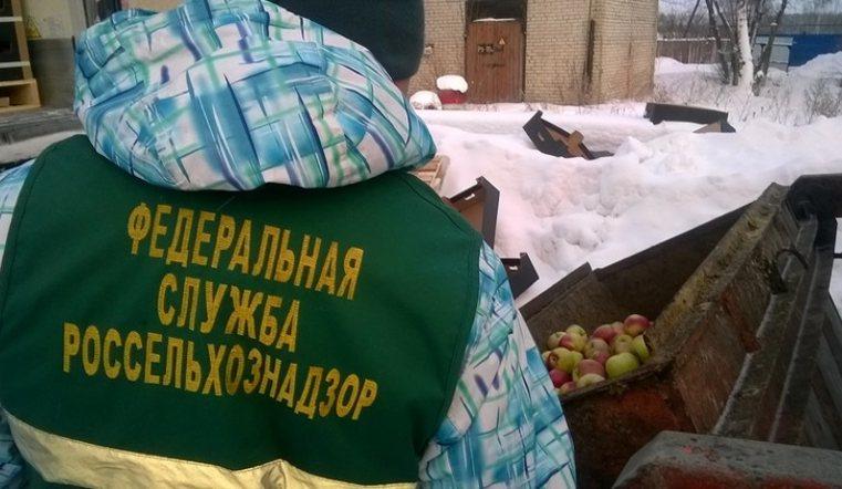 Крупную партию польских яблок изКазахстана уничтожили в РФ