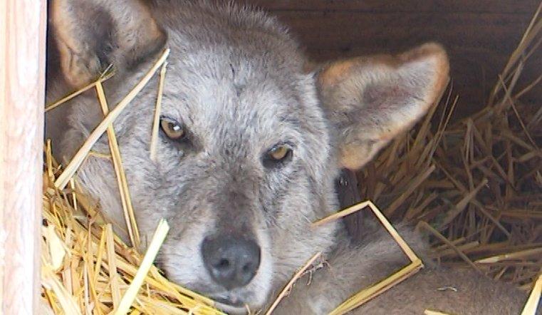Еще вчера пес спал под плитами теплотрассы в Троицке