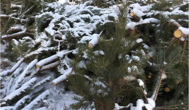 Челябинские власти повысят штрафы для неделальных торговцев елками