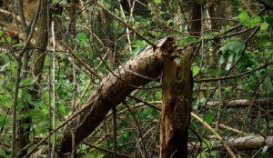уголовное дело за поваленные деревья