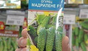 """Агрономы советуют приобрести семена нового сорта """"Мадрилена"""""""