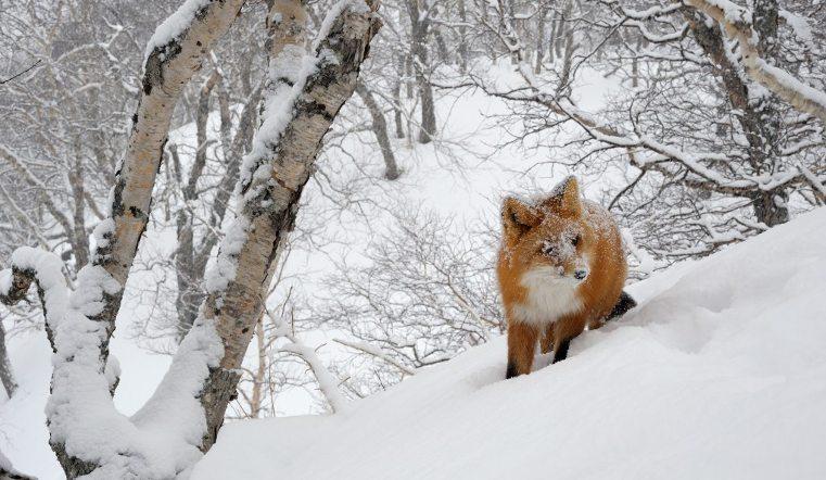 На Южном Урале началась перепись зверей