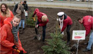 Зеленый театр высадит деревья
