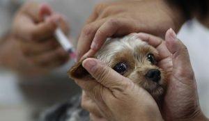 В Челябинске началась бесплатная вакцинация животных от бешенства