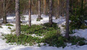 С потеплением на Южном Урале активизируются клещи