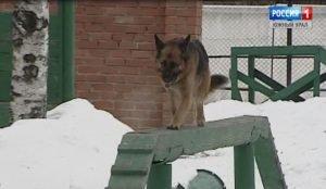 собака ГУФСИН