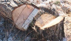 Вырубка деревьев в Челябинске