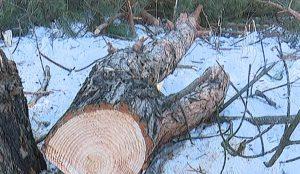 """Вырубка деревьев в """"Парковом"""""""
