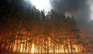 В Челябинской области леса горят из-за плохой работы лесников