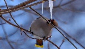 11 апреля в Челябинскую область придет тепло