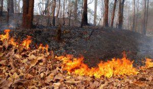 На Южном Урале начали гореть леса