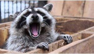 В Челябинском зоопарке начали массово просыпаться звери