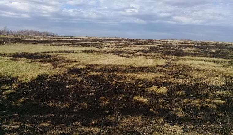 Поджог травы для жителя Кунашакского района вылился в«уголовку»