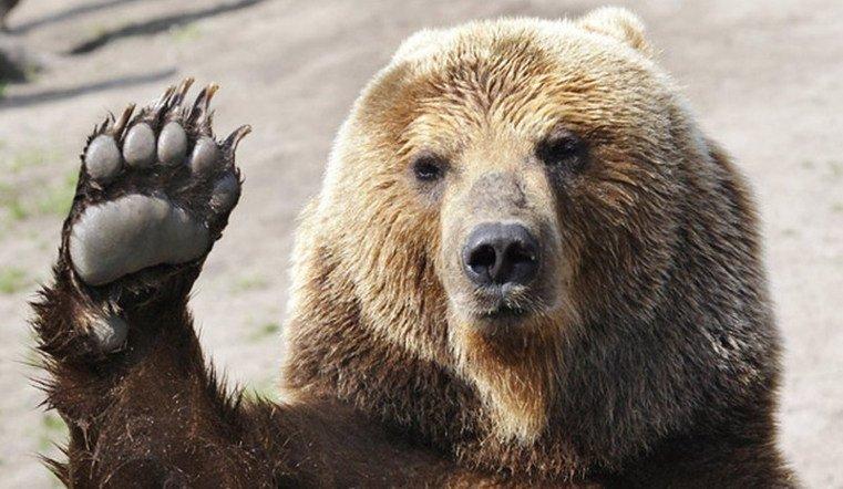 Как я на медведя ходила